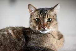 Pets Photography Momentous Pix Singapore